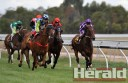 Colac Turf Club was disappointed after hot weather reduced the crowd for its 150th Colac Gold Cup.