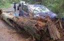 Tourists-crash-into-tree
