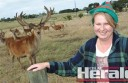 Pam Joiner's husband Greg Saunders' passion for reindeer started 25 years ago and now the Yeo farmers have about 22 in their herd.