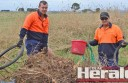 "Colac Otway Shire Council Cosworks staff Jayden Hodge and Darren Smith collect a pile of rubbish dumped on the side of Christies Road. An Elliminyt resident is ""fed up"" with illegal rubbish dumping on Colac district roads."