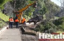 Colac Otway Shire Council has closed a walking path along Lake Colac while workers clear a fallen tree which blocked the track yesterday morning.