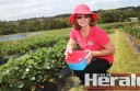 Timboon strawberry grower Heather Nichols is enjoying picking and being in the strawberry industry for her second fruiting season this year.